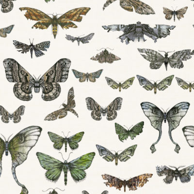 Entomologie-Moth-Drawer_Oyster-linen-blend_Original.jpg
