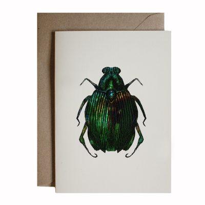 beetle ENT13