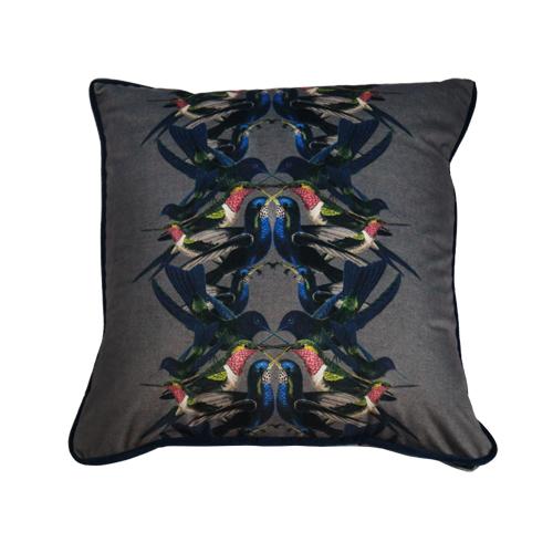 Cushion Hummingbird